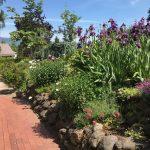 abigails/spring/garden/path